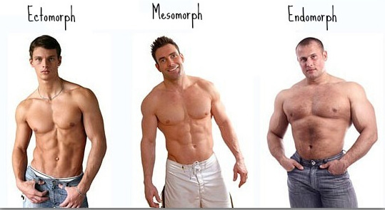 What is Endomorph body type? - Way to Skinny
